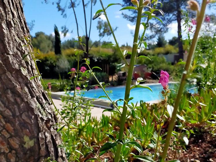 studio vue sur le jardin et la piscine