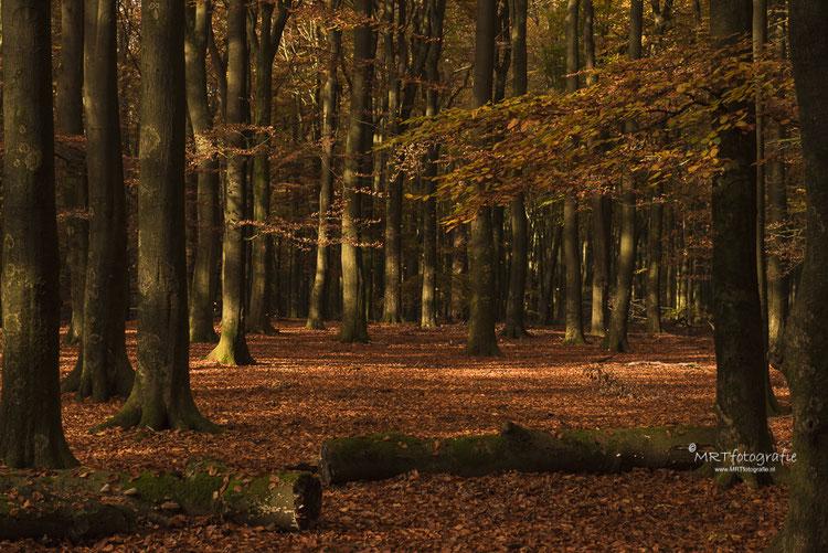 De scherpte ligt hier niet op de voorste bomen zoals vaak het geval zal zijn, maar op de bomen waar het zonlicht op valt.