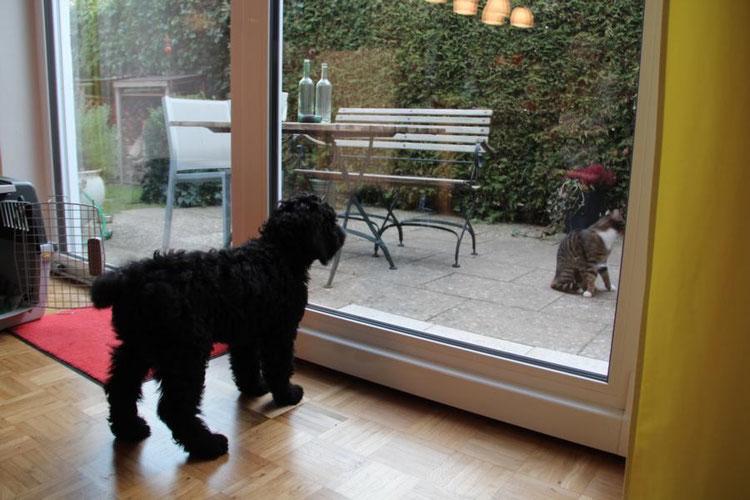 22.12.2014: Nachbars Katze schaut auch mal vorbei, wie interessant.