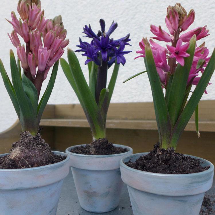 Garten - Neuer Look für Tontöpfe - Tontöpfe mit Kreidefarbe gestalten - DIY-Projekt