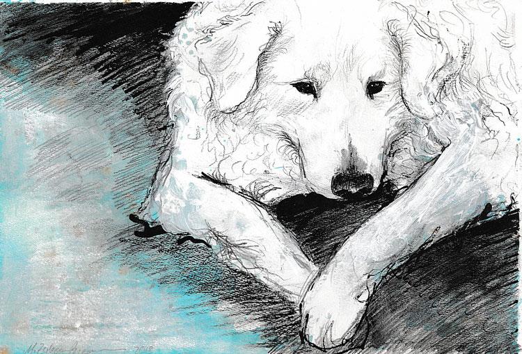 Liegender Hund