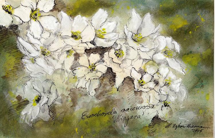 Bild weiße Blüten