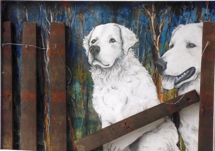 Bild Zwei Hunde vor Zaunlücke