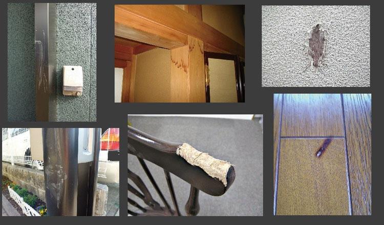 ウッドリペア 住宅木部、フローリング、家具、アルミサッシ、クロス、壁紙、リペア、修復