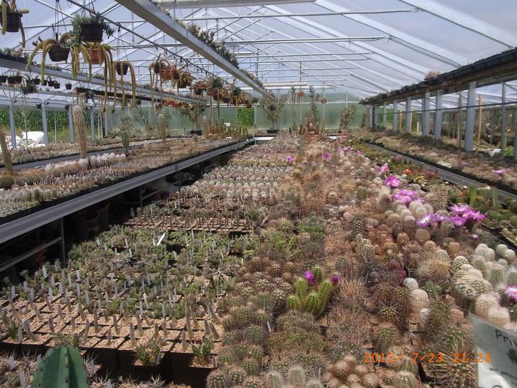 Ein erster Blick ins Gewächshaus macht jeden Kaktusfan nervös - hier kann man sich eindecken!