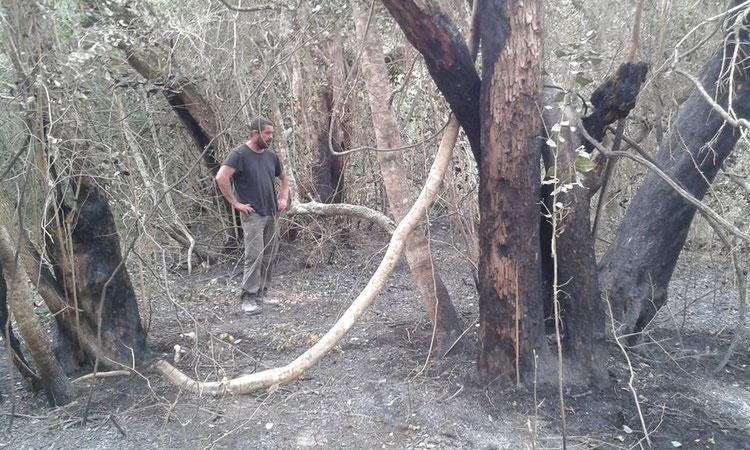 南アフリカ プラットボスの火事