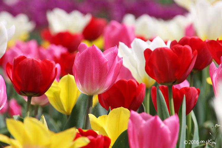 花と実の写真
