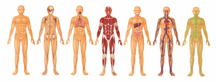Die wichtigsten Wirkungsbereiche der Massage