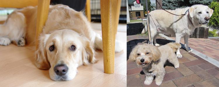 元盲導犬訓練士が札幌市南区でドッグホテルとドッグトレーニングをやっております。