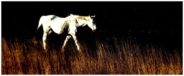 """Laufendes, abgemargertes Pferd (""""Strähne für Strähne"""" Lyrik)"""