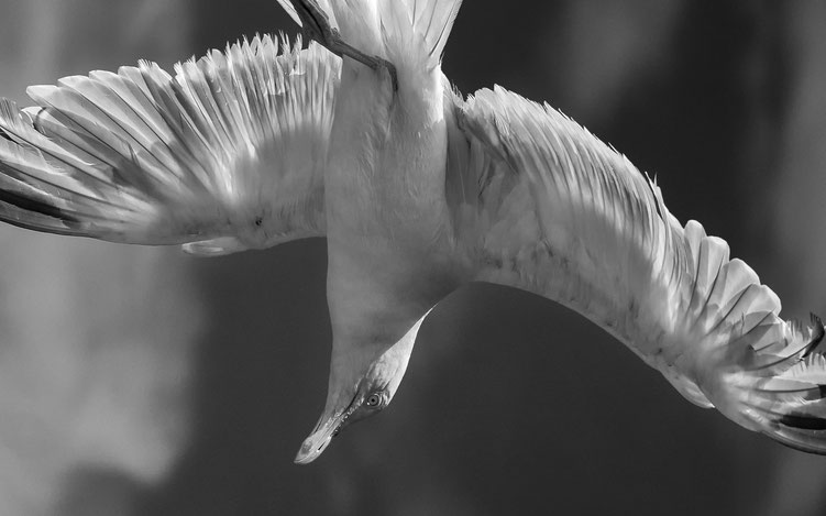 Ralf - Foto 5 - Frosch-böser Vogel-Perspektive