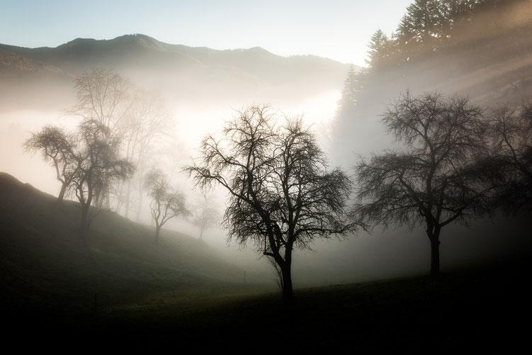 Peter - Foto 3 - Nebelgrenze