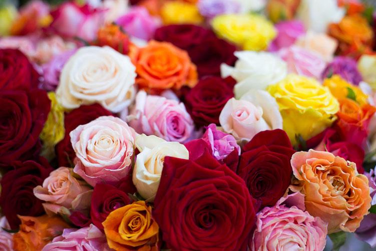 Anna - Foto 9 - Der Duft der Rose