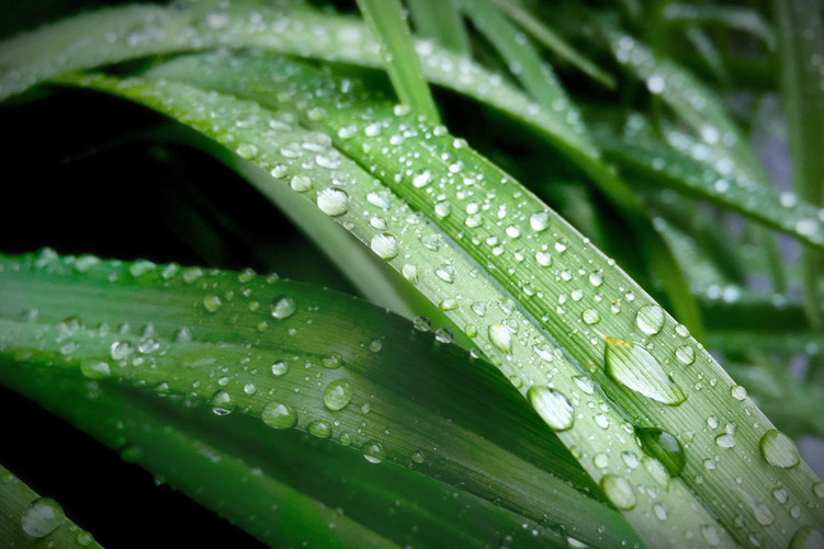 Peter R. - Foto 12 - rainy atmosphere