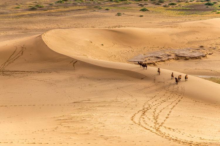 Sarah - Foto 2 - Kamele