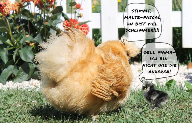 seidenhühner bruteier zu verkaufen