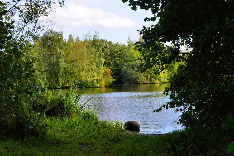 Rund um den Wadeackersee 13