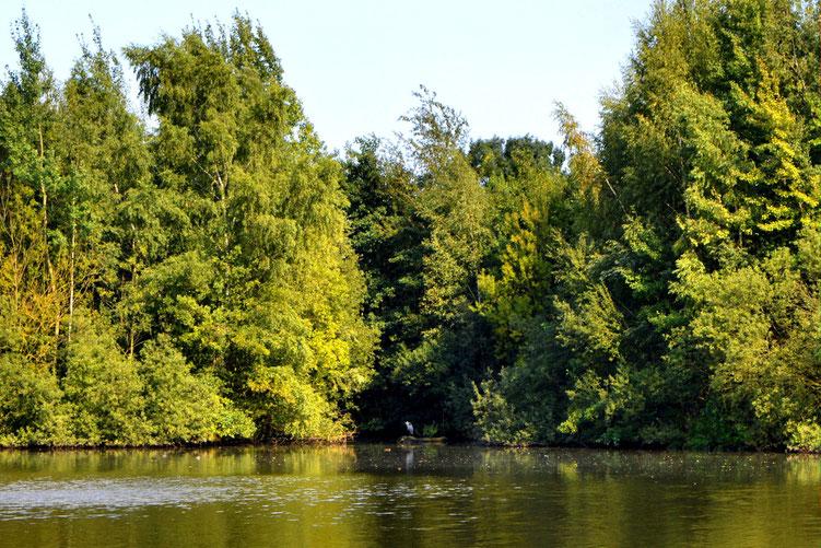 Rund um den Wadeackersee 9