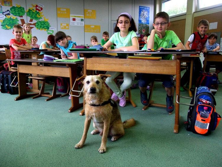Schulhund DJ