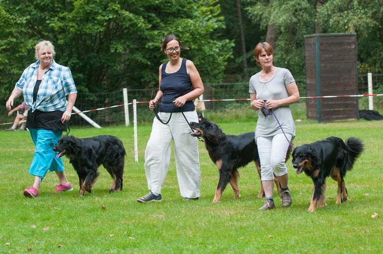 Zuchtgruppe von der Diamandenen Aue (v.l.n.r.: Liebling Louise, Liara Lenia umd Lucy Lectric, WT 05.06.2015)