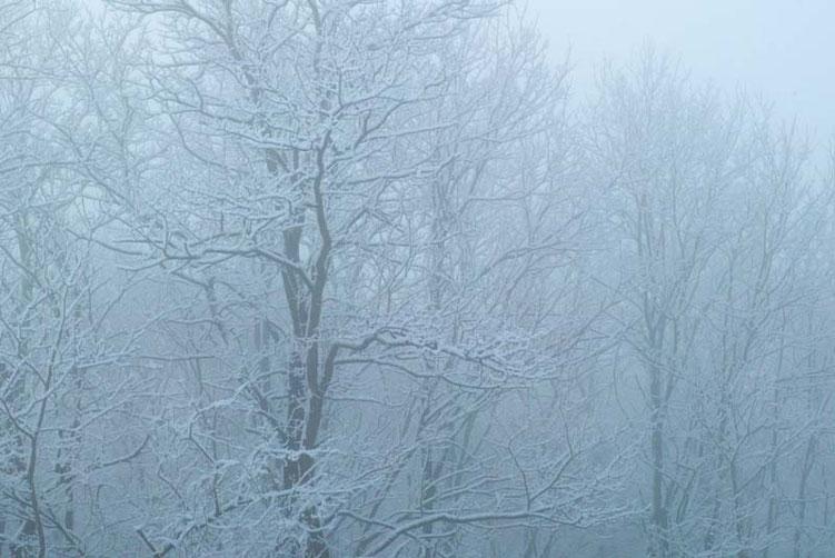 周囲の雪化粧