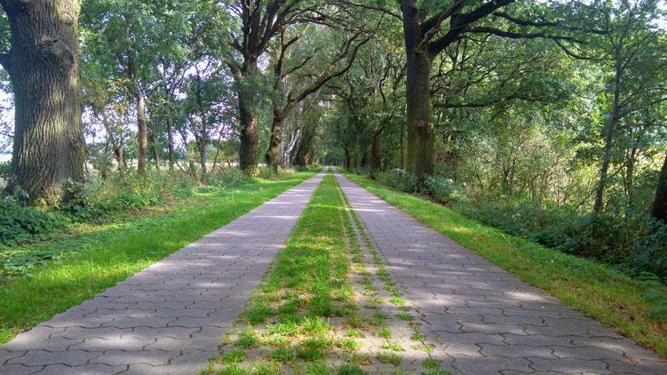 Teilstücke des Havelland-Radwegs sind auch ohne Asphaltierung immer noch gut befahrbar.