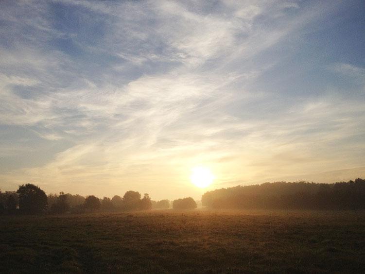 Unser Stück märkische Landschaft - gesehen von der Grundstücksgrenze.