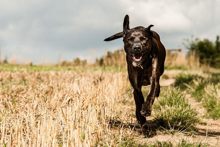 Higgins beim Fotoshooting für die 5 Elemente-Ernährung von Barkhofen Tiernahrung