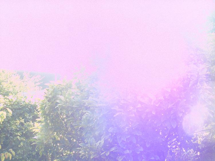 Rosafarbener Himmel = bedingungslose Liebe  Quelle:www.lichtwesenfotografie.com