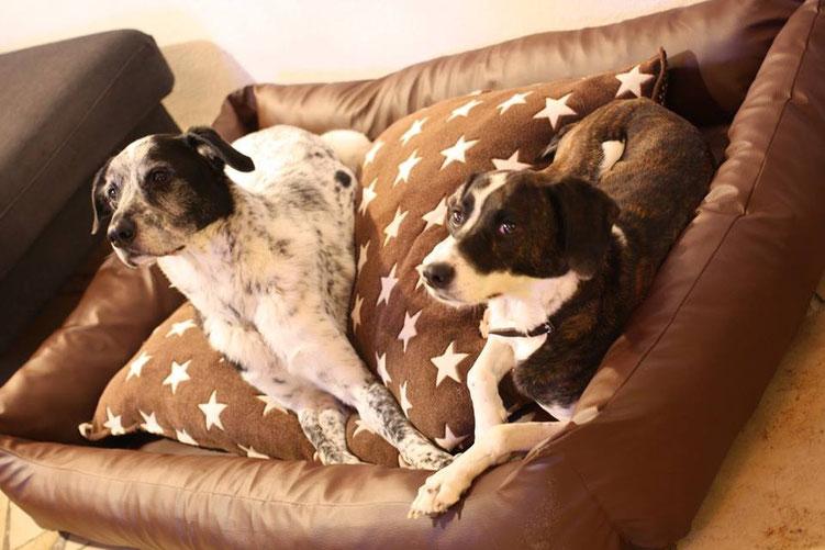 Hundebetten, Hundekissen und Hundedecken für drinnen und draussen