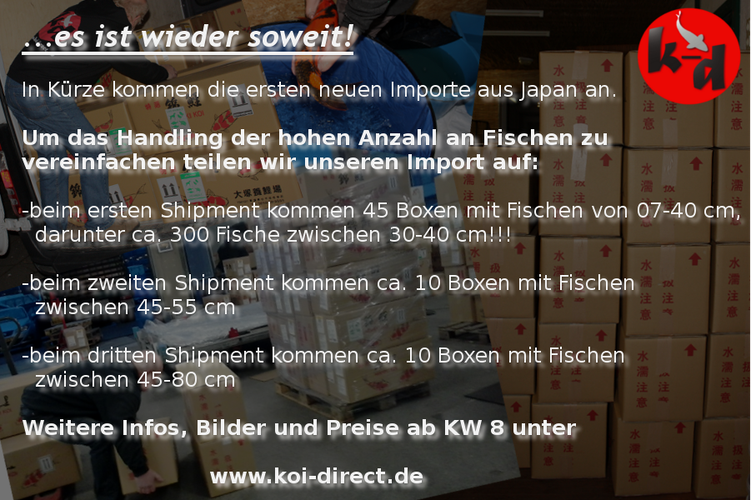Bild: Koiimport 2015 koi-direct