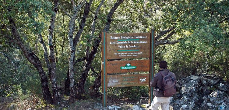 forêt de la Sainte Baume, gérée par l'ONF