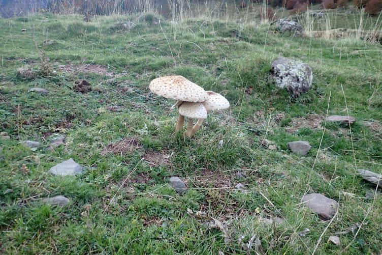 De beaux (et bons?) champignons...
