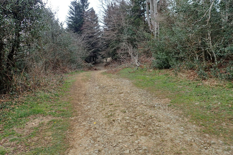 Passage dans le bois.