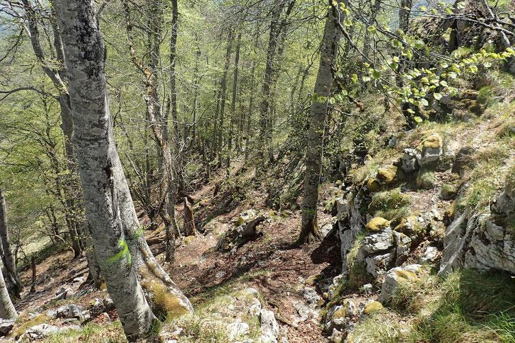 Petite descente dans le bois versant Nord.
