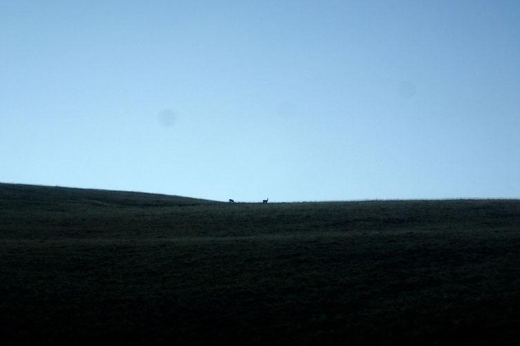 Au cours de la montée, je suis surpris de voir quelques isards.