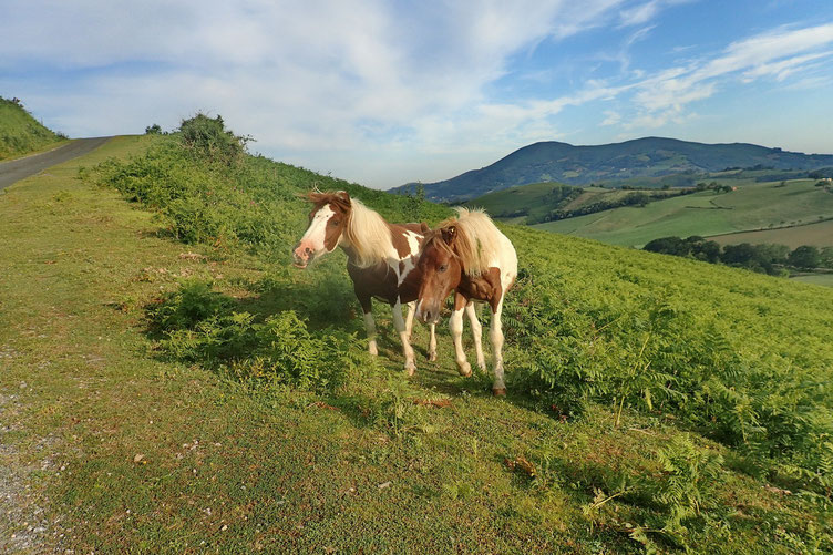 Petit chevaux.