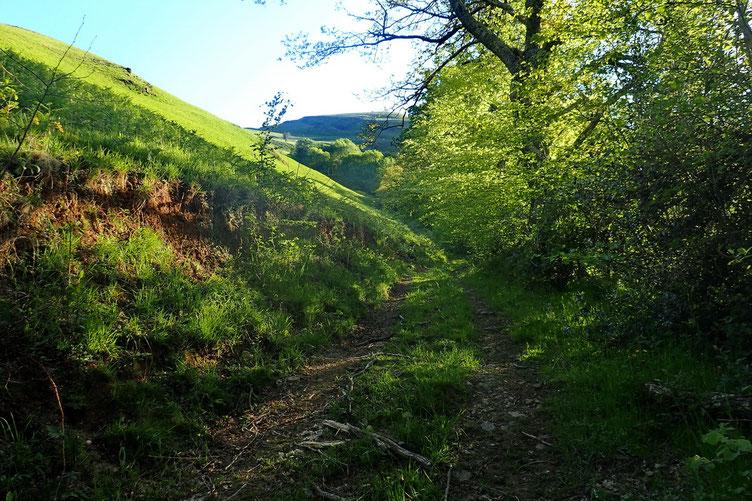 Le vert du Pays Basque.