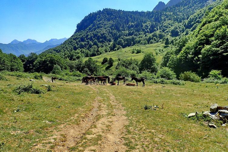 Serait-ce les ânes rencontrés hier au départ de la rando?