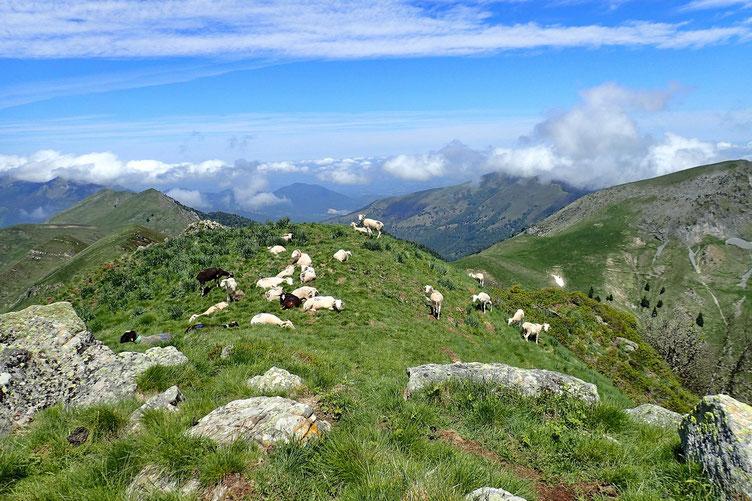 Juste à côté, d'autres moutons...