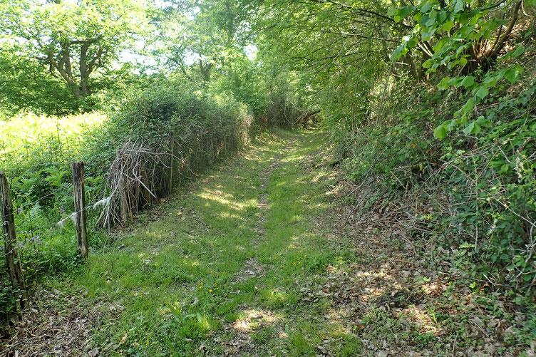 Pour éviter un peu la route goudronnée de ce matin, je prends un petit racourci champêtre...