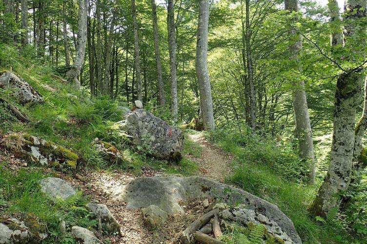 Passage en forêt.