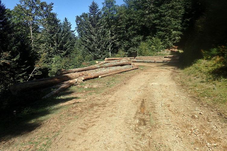 Ça scie, ça coupe, ça tire et ça range les troncs le long de la piste.