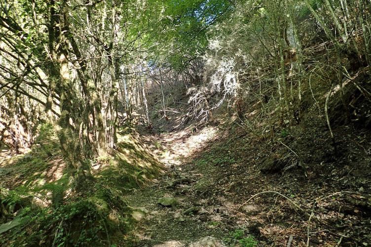Passage en sous-bois