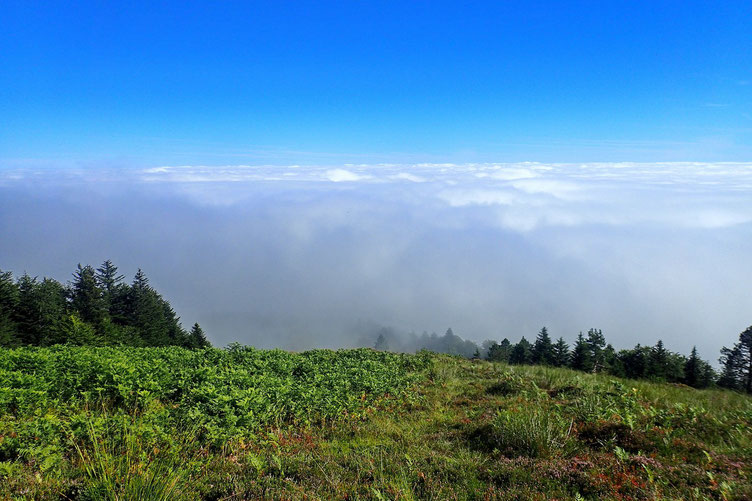 La brume s'éloigne au fur et à mesure que je monte.