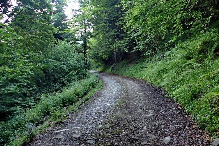 Puis la piste à travers bois...
