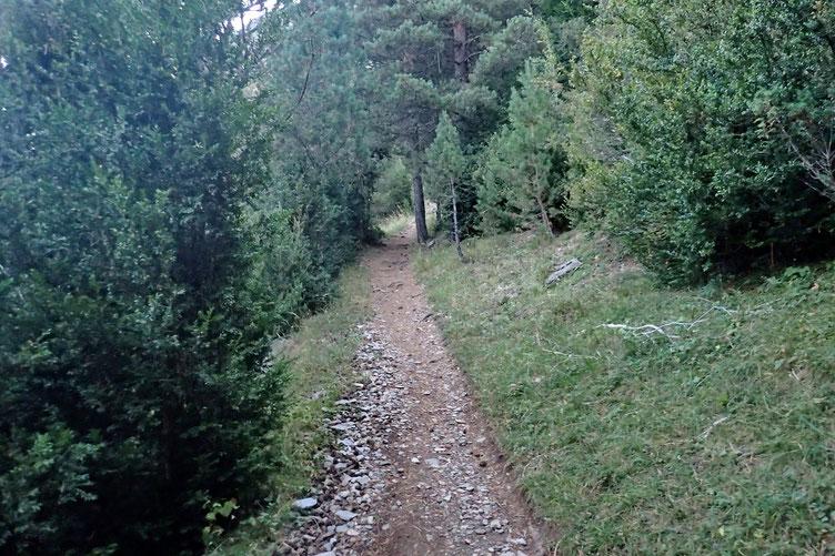 Après le lever du jour, je découvre un sentier plutôt sympa, qui coupe en permanence la piste.