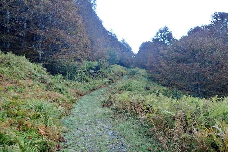 Je suis la piste qui va traverser le bois d'Espélunguère.
