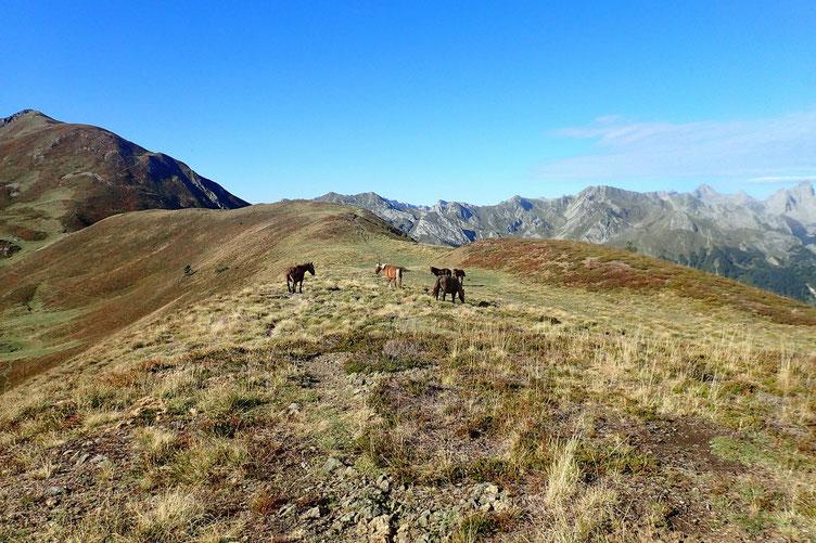 La crête est large, tous les animaux sont pratiquement redescendus, les derniers à descendre seront les chevaux.
