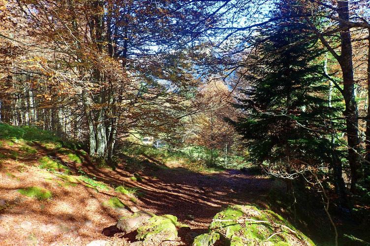 Dernier petit passage en forêt.
